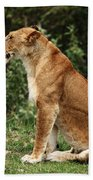Lioness On The Masai Mara  Hand Towel