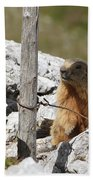Little Marmot Bath Towel