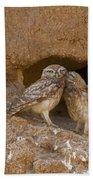 Little Owl Athene Noctua Bath Towel