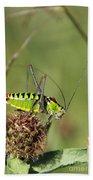 Long-horned Katydid Tettigonid Hand Towel
