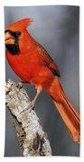 Male Cardinal Bath Towel