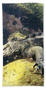 Marine Iguana Grazing On Seaweed Bath Towel