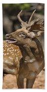 Mesopotamian Fallow Deer 4 Bath Towel