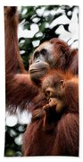 Mother And Baby Orangutan Borneo Bath Towel