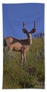 Mule Deer Buck In Velvet   #2231 Bath Towel