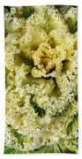 Ornamental Cabbage Plant Hand Towel