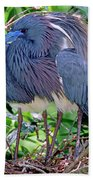 Pair Of Tricolored Heron At Nest Bath Towel