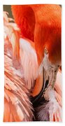 Pink Flamingo At A Zoo In Spring Bath Towel