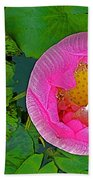 Pink Lotus In Backyard Of Home In Bangkok-thailand. Bath Towel