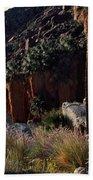 Plants On Landscape, Anza Borrego Bath Towel
