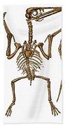 Pterodactylus, Extinct Flying Reptile Bath Towel
