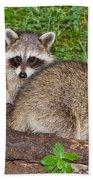 Raccoons Bath Towel