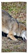 Red Wolf Bath Towel