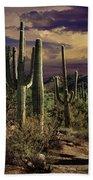 Saguaro Cactuses In Saguaro National Park Bath Towel