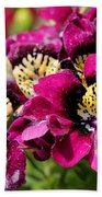 Schizanthus From The Hit Parade Mix Bath Towel