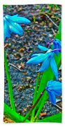 Scilla In New Maiden Cemetery In Moscow-russia  Bath Towel