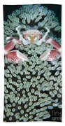 Spotted Porcelain Crab In Anemone Hand Towel