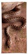 Spotted Python Antaresia Maculosa Bath Towel