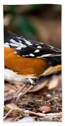 Spotted Towhee Pipilo Maculatus Bath Towel