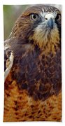 Swainson's Hawk Bath Towel