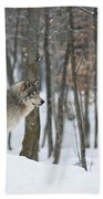 Timber Wolf In Winter Bath Towel
