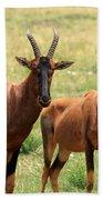 Topi Antelope Hand Towel