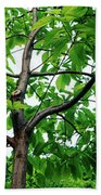 Trees In A Park, Adams Park, Wheaton Hand Towel