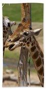 Two Reticulated Giraffes  - Giraffa Camelopardalis Bath Towel