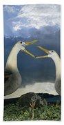 Waved Albatross Courtship Dance Bath Towel