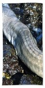 White Moray Eel Bath Towel
