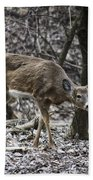 White-tail Deer Bath Towel