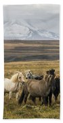 Wild Icelandic Horses Bath Towel
