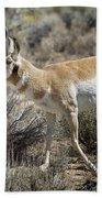 Wyoming Pronghorn Bath Towel