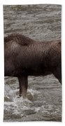 Yearling Moose In The Shoshone River   #1289 Bath Towel