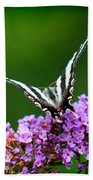 Zebra Swallowtail Butterfly Square Bath Towel
