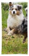 Australian Shepherd Dog Bath Towel