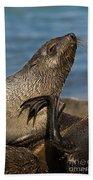 Antarctic Fur Seal Bath Towel
