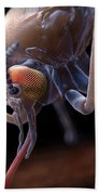 Anopheles Mosquito Bath Towel
