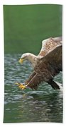 White-tailed Sea Eagle In Norway Bath Towel