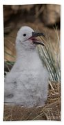Black-browed Albatross Bath Towel