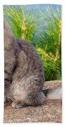 Cat In Hydra Island Bath Towel