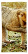 Monkey  Bath Towel