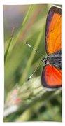 17 Balkan Copper Butterfly Bath Towel