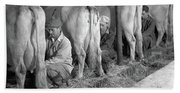 1930s 1940s Three Men Hand Milking Bath Towel