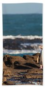Adult Nz Yellow-eyed Penguin Or Hoiho On Shore Bath Towel