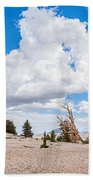 Ancient Panorama - Bristlecone Pine Forest Bath Towel