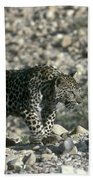 Arabian Leopard Panthera Pardus 1 Bath Towel