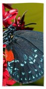 Atala Butterfly Bath Towel