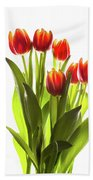 Backlit Tulip Flowers Against White Bath Towel