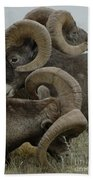 Big Horn Sheep  Bath Towel